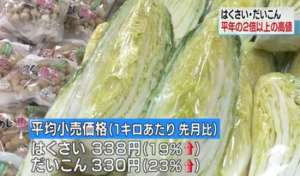 日本冬季蔬菜价格大涨 白菜和白萝卜比往年贵2倍多